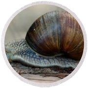 Burgundy Snail Round Beach Towel