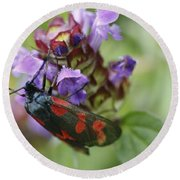 Burnet Moth Round Beach Towel