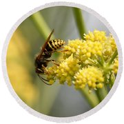 Common Wasp Round Beach Towel