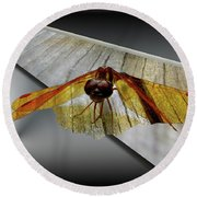 Eastern Amber Dragonfly 3d Round Beach Towel
