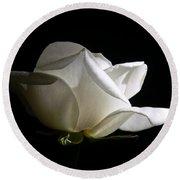 Evening Light White Rose Flower Round Beach Towel