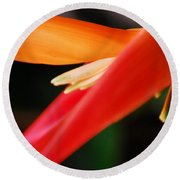Fine Art - Bird Of Paradise Round Beach Towel