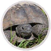 Gopher Tortoise Close Up Round Beach Towel