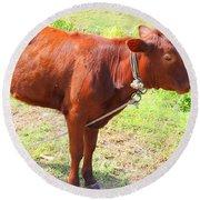 Jamaican Cow Round Beach Towel