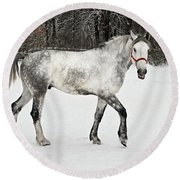 Light  Grey Horse Goes On A Winter Glade  Round Beach Towel