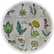 Lithography Of Common Flowers Round Beach Towel