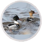 Red-breasted-merganser-ducks Round Beach Towel