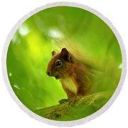 Red Squirrel  Round Beach Towel