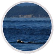 Southern Resident Orcas And Salmon Off The San Juan Islands Playing With Salmon Round Beach Towel