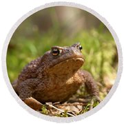 The Common Toad 3 Round Beach Towel