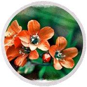 Wildflowers 5 -  Polemonium Reptans  - Digital Paint 3 Round Beach Towel