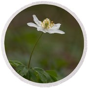Wood Anemone Round Beach Towel