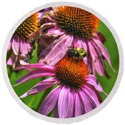 01 Bee And Echinacea Round Beach Towel