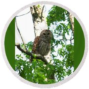 0298-001 - Barred Owl Round Beach Towel