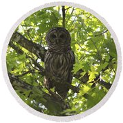 0313-010 - Barred Owl Round Beach Towel