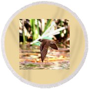 0518 - Northern Rough-winged Swallow Round Beach Towel