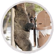 060510-grizzly Back Scratch Round Beach Towel