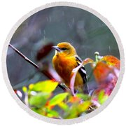 0651 - Baltimore Oriole Round Beach Towel