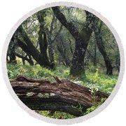 1b6338 Oak Forest On Sonoma Mountain Ca Round Beach Towel
