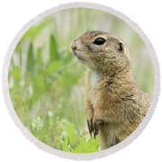 A European Ground Squirrel Standing In A Meadow In Spring Round Beach Towel