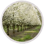 A Flowering Cherry Orchard Round Beach Towel
