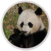Adorable Giant Panda Eating A Green Shoot Of Bamboo Round Beach Towel