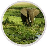 African Elephant In Swamp Round Beach Towel