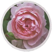 Alnwick Rose 1830 Round Beach Towel