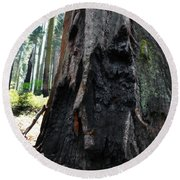 Alta Vista Giant Sequoia Round Beach Towel