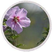 Althea Rose Of Sharon Hibiscus Bloom Round Beach Towel