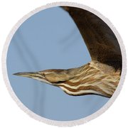 American Bittern Flies By Round Beach Towel