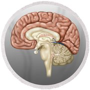 Anatomy Of The Brain, Illustration Round Beach Towel