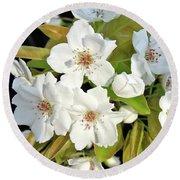 Apple Blossoms 0936 Round Beach Towel