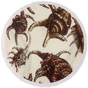 Aquatic Animals - Conch - Shells - Snails Round Beach Towel