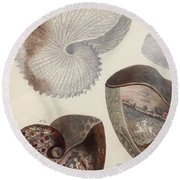Aquatic Animals - Sea - Shells - Composition - Alien - Wall Art  - Interior Decoration  Round Beach Towel