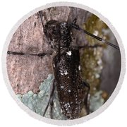 Asian Long-horned Beetle Round Beach Towel