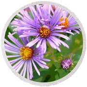 Asters Round Beach Towel