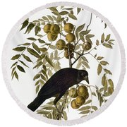 Audubon: Crow Round Beach Towel