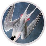 Audubon: Tern Round Beach Towel