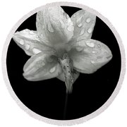 Backside Daffodil Dew Round Beach Towel