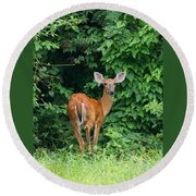 Backyard Deer Round Beach Towel