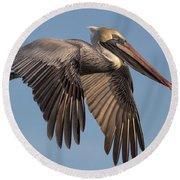 Beautiful Brown Pelican Round Beach Towel