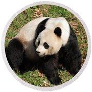 Beautiful Giant Panda Bear In The Wild Round Beach Towel