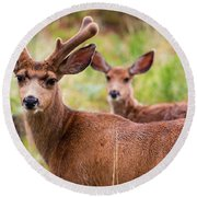 Beautiful Mule Deer Herd Round Beach Towel