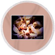 Bee On Apple Blossoms Round Beach Towel