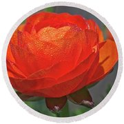 Begonia In The Morning Round Beach Towel