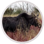 Big Mama Moose Round Beach Towel