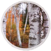 Birch Trees Fall Scenery Round Beach Towel