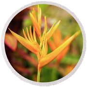 Bird Of Paradise Plant In The Garden. Round Beach Towel