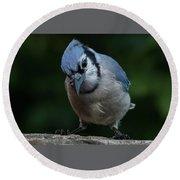 Birds From Heaven - Bluejay Round Beach Towel